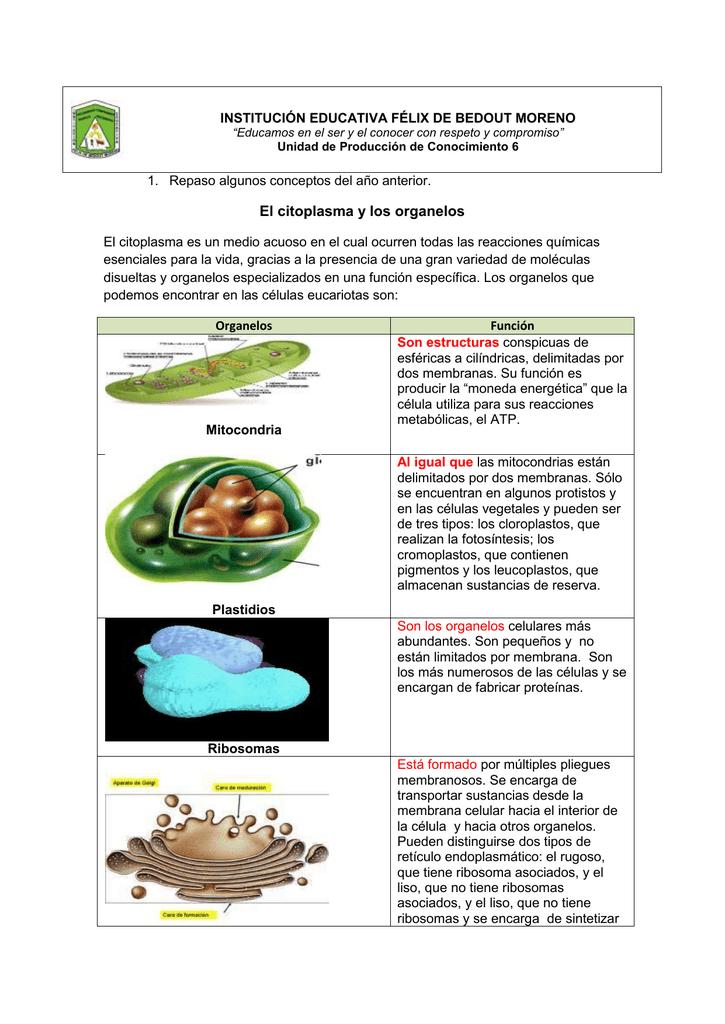 El Citoplasma Y Los Organelos