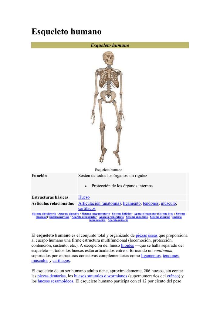 Esqueleto humano Función Estructuras básicas