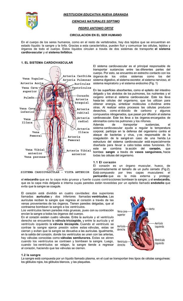 INSTITUCION EDUCATIVA NUEVA GRANADA CIENCIAS NATURALES SEPTIMO PEDRO ...