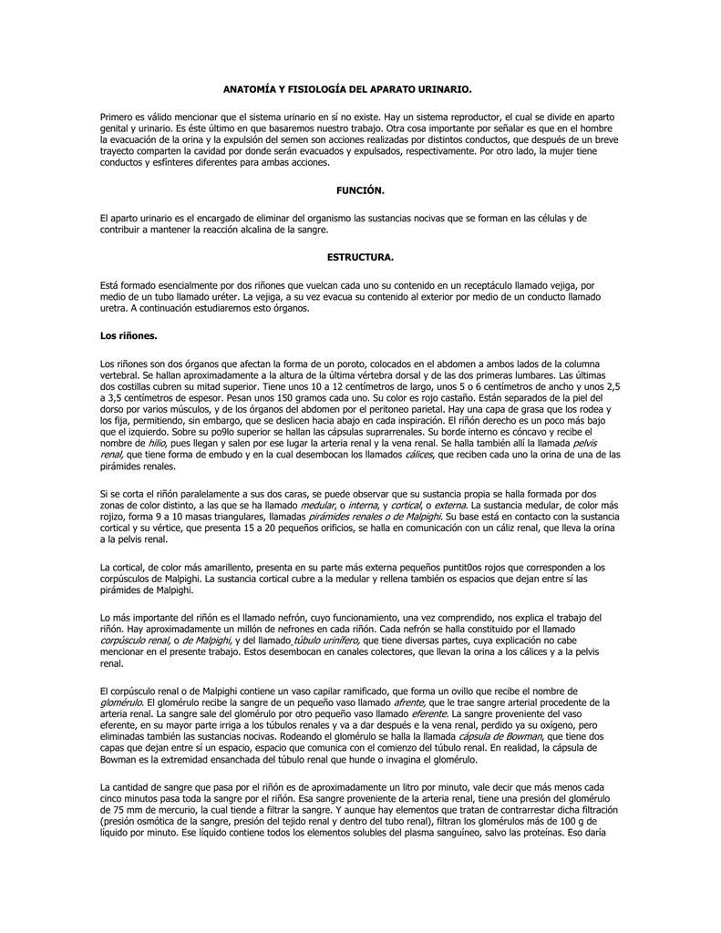 Atractivo Notas Fácil Anatomía Y Fisiología Colección - Imágenes de ...