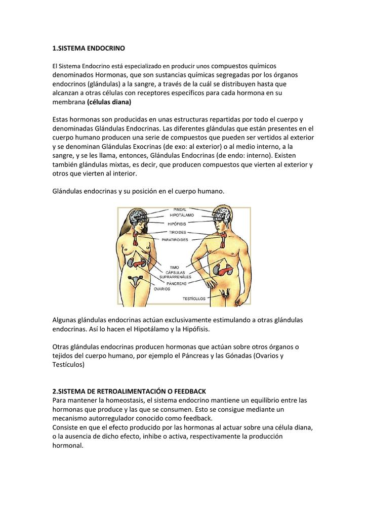 1.SISTEMA ENDOCRINO El Sistema Endocrino está especializado