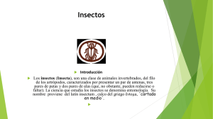 Insectos en power point