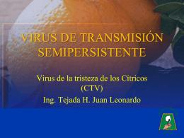 Tristeza de los citricos1