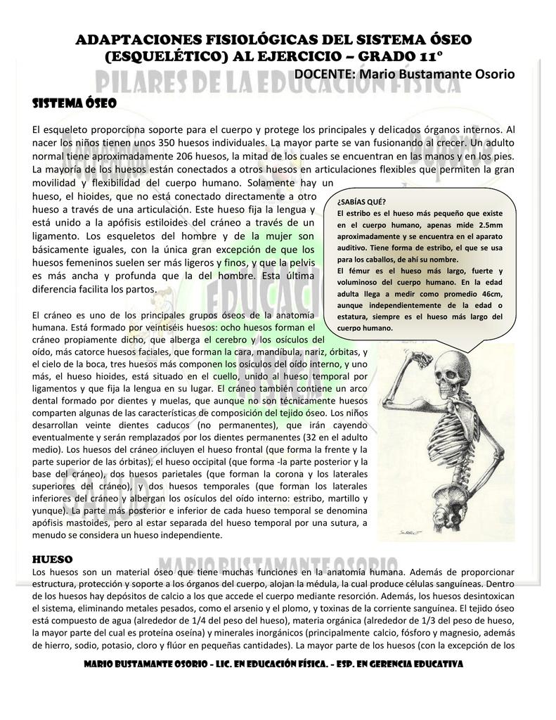 taller - adaptaciones fisiologicas del sistema oseo