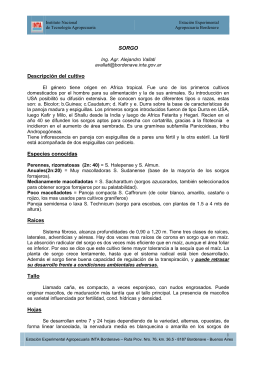 12. descripcion_sorgo (1).pdf