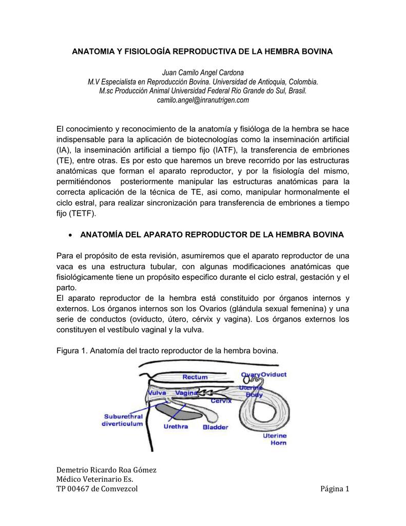 6. ANATOMIA Y FISIOLOGÍA REPRODUCTIVA DE LA HEMBRA BOVINA