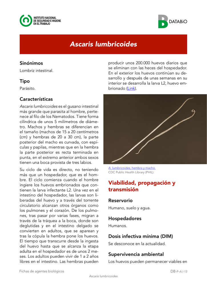 ciclo de vida de la ascaris lumbricoides pdf
