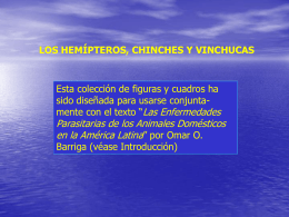 Chinches y vinchucas