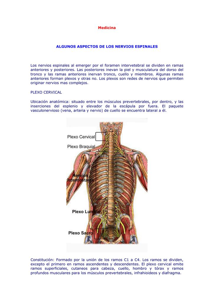 Medicina - Los Eskakeados