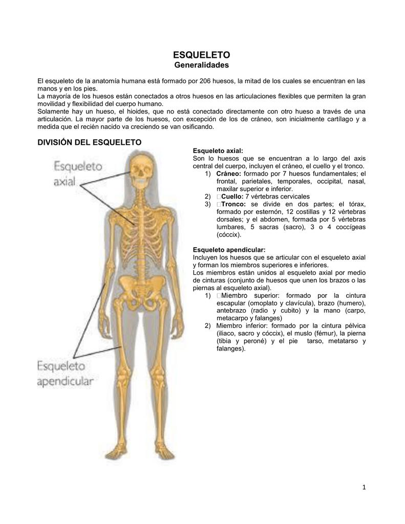 Generalidades: Esqueleto, Huesos