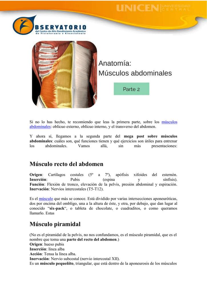 transverso del abdomen origen e insercion