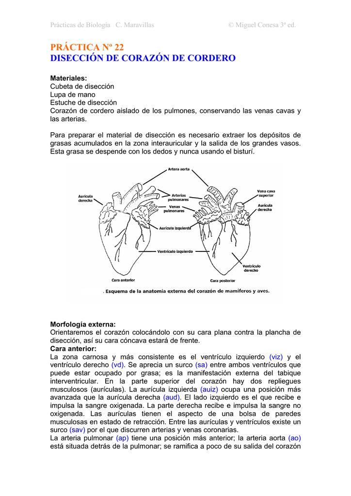 Fantástico Corazón Ovejas Anatomía Y Fisiología Laboratorio De ...