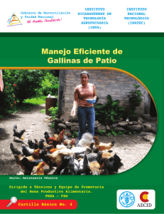Manejo eficiente de gallinas de patio