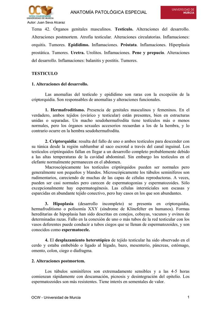 Tema 42. Órganos genitales masculinos. Testículo. Alteraciones del