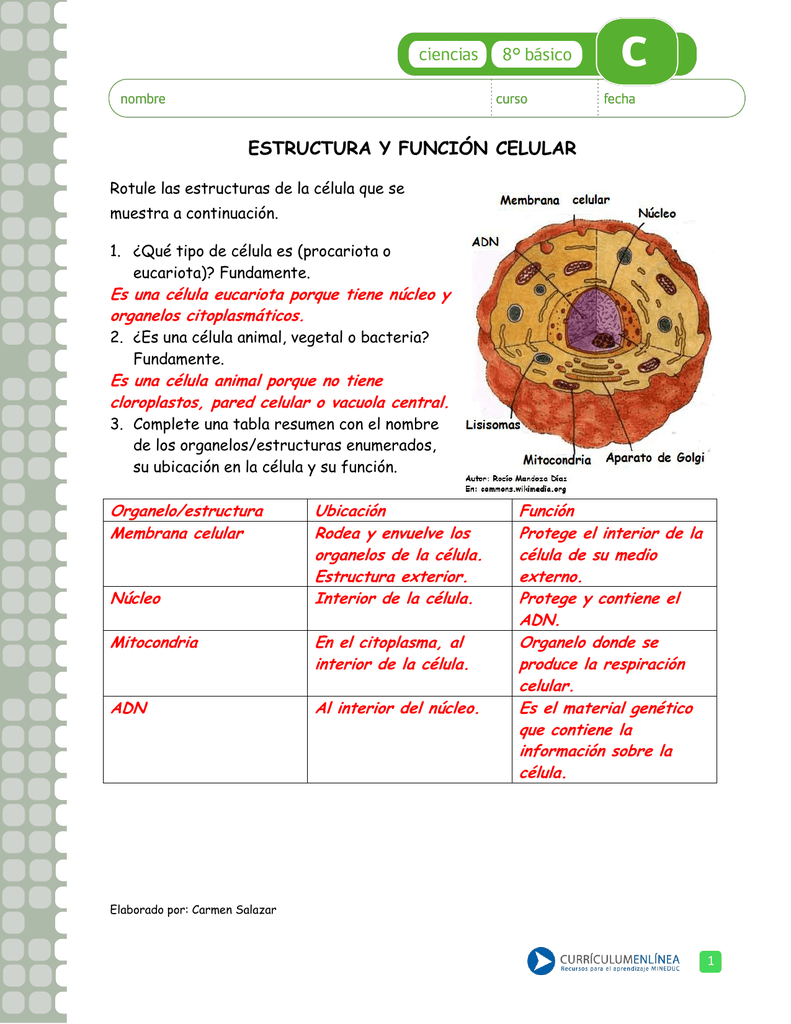 Estructura Y Función Celular