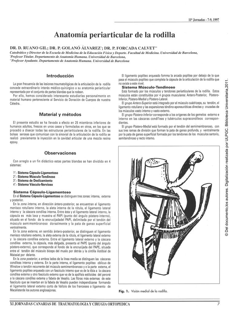 Anatomía periarticular de la rodilla
