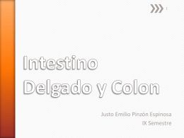 Intestino Delgado y Colon
