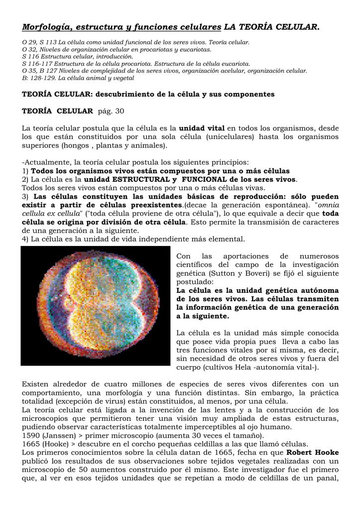 Morfología Estructura Y Funciones Celulares La Teoría Celular