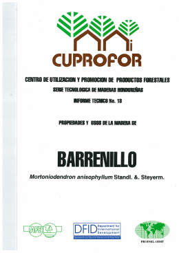 barrenillo