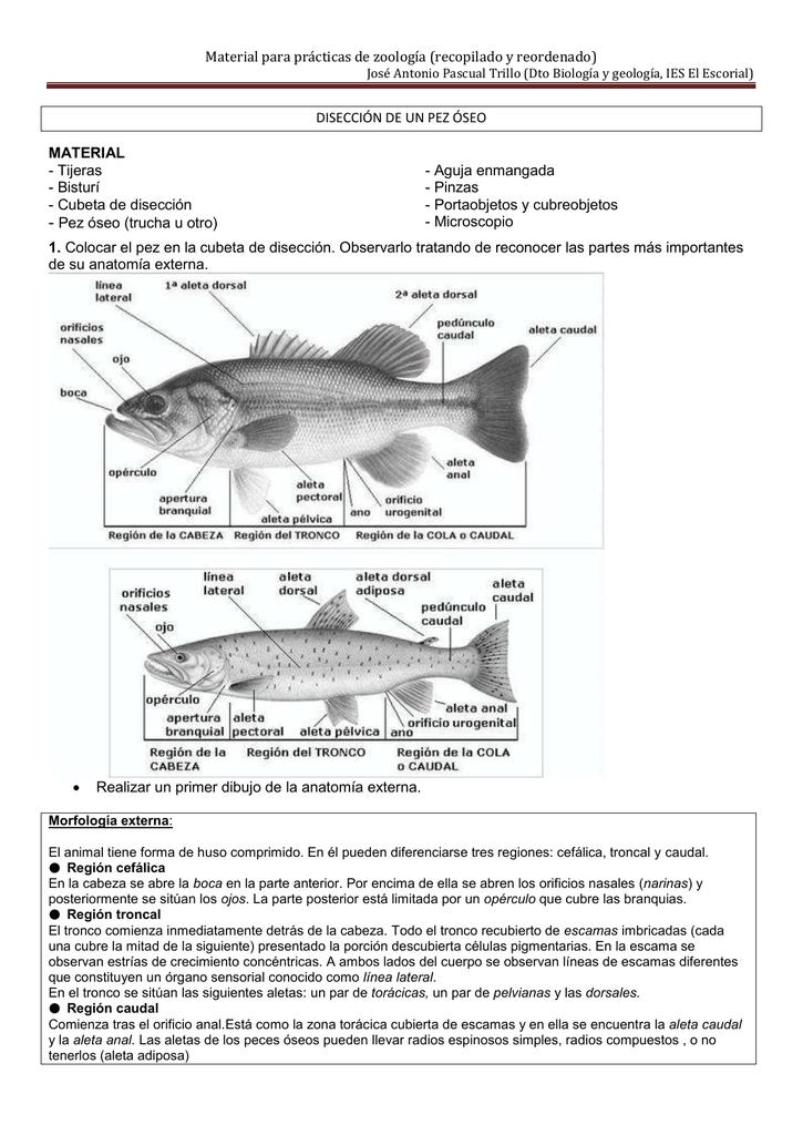 Anatomía y disección de pez óseo