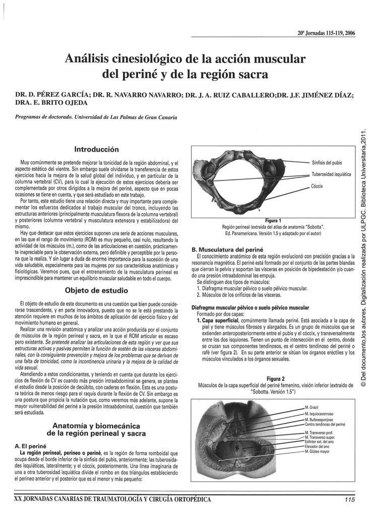 Análisis cinesiológico de la acción muscular del periné y