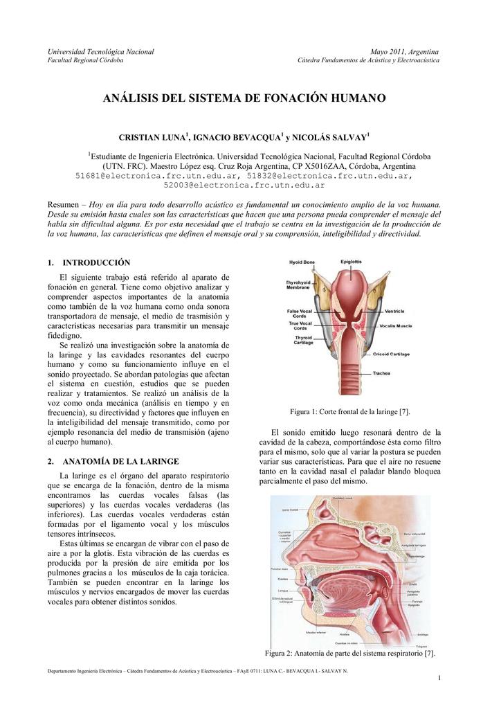 análisis del sistema de fonación humano - Cátedras
