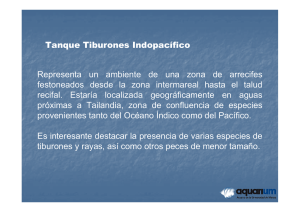 tanque tiburones indopacifico