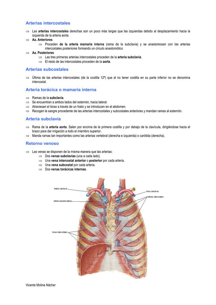 Angiología del tórax.