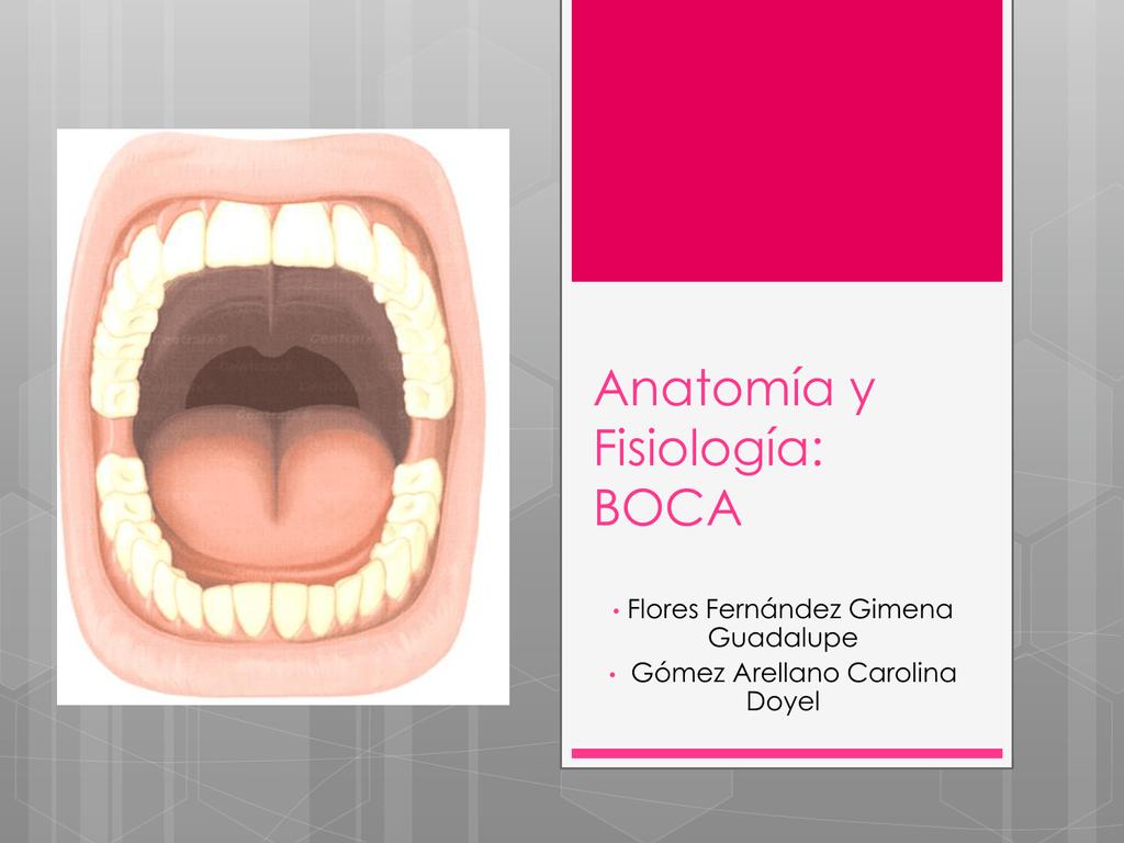Anatomía y Fisiología: BOCA