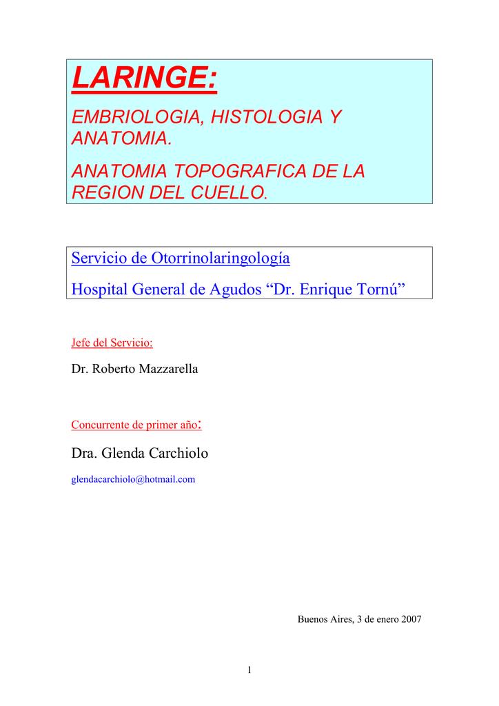 Laringe embriología, histología y anatomía/Anatomía topográfica de