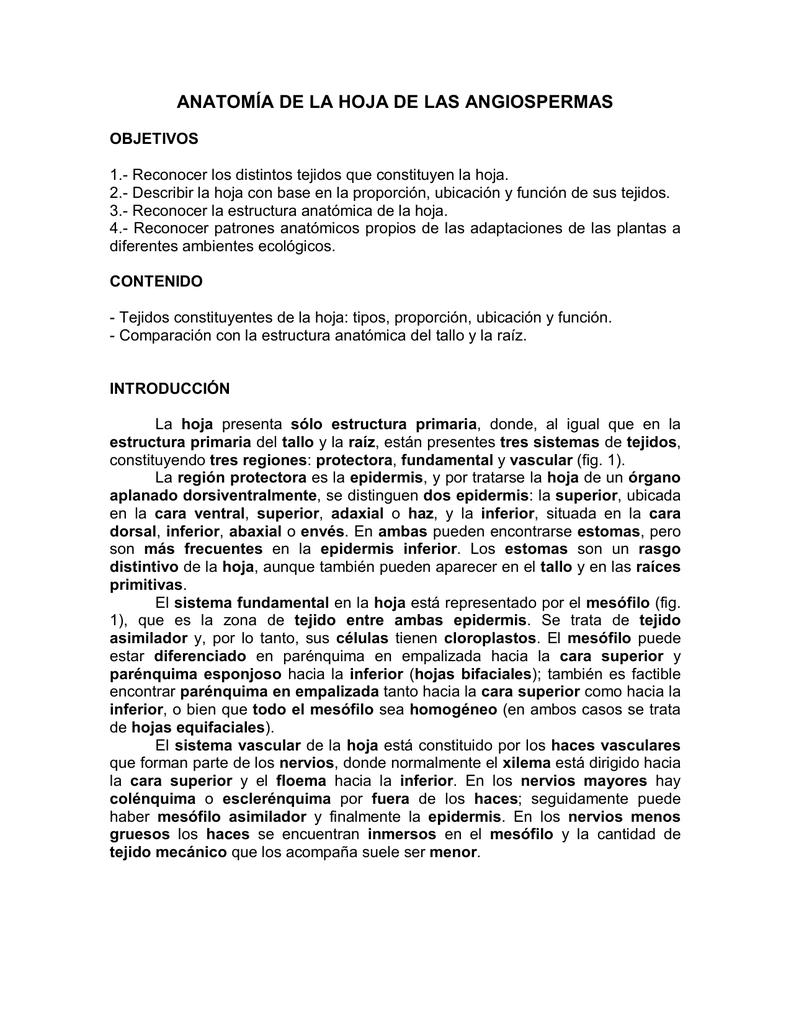 ANATOMÍA DE LA HOJA DE LAS ANGIOSPERMAS