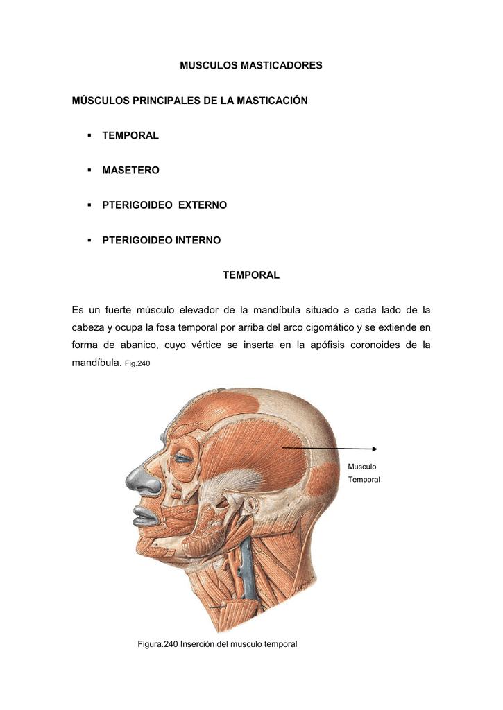 Músculos Masticadores - Dr. Enrique Martinez Martinez