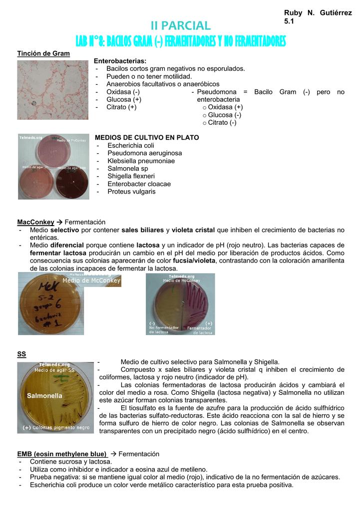 prueba de lactosa en bacterias
