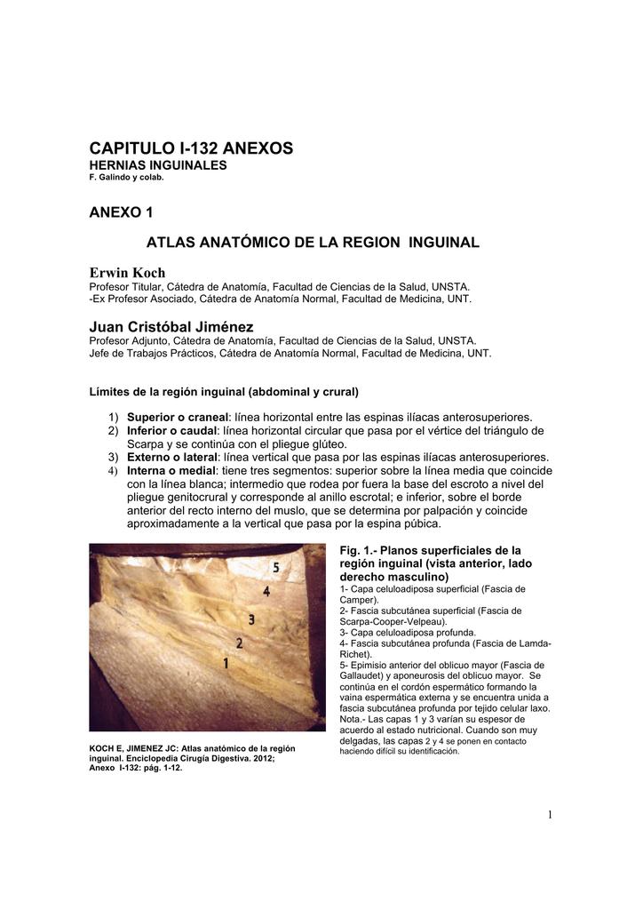Anexo al Cap I-132 Atlas anatómico de la región inguinal