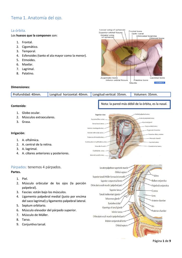 Tema 1. Anatomía del ojo.