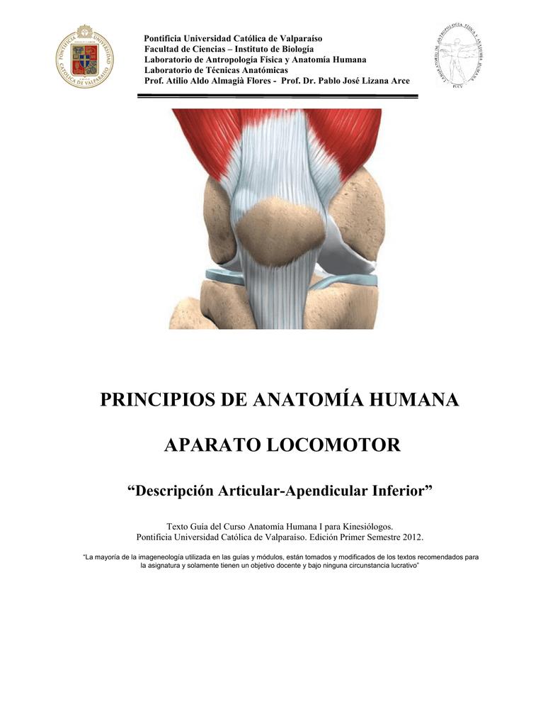 Descripción Sistema Articular Apendicular Inferior