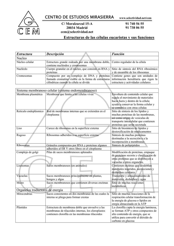Célula Eucariota Funciones Y Estructura