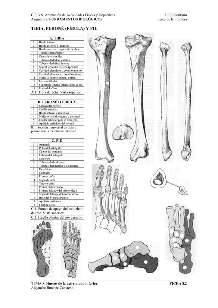 ficha huesos de la pierna 2