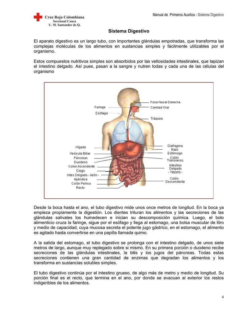Bonito Ubicación íleon Colección - Imágenes de Anatomía Humana ...