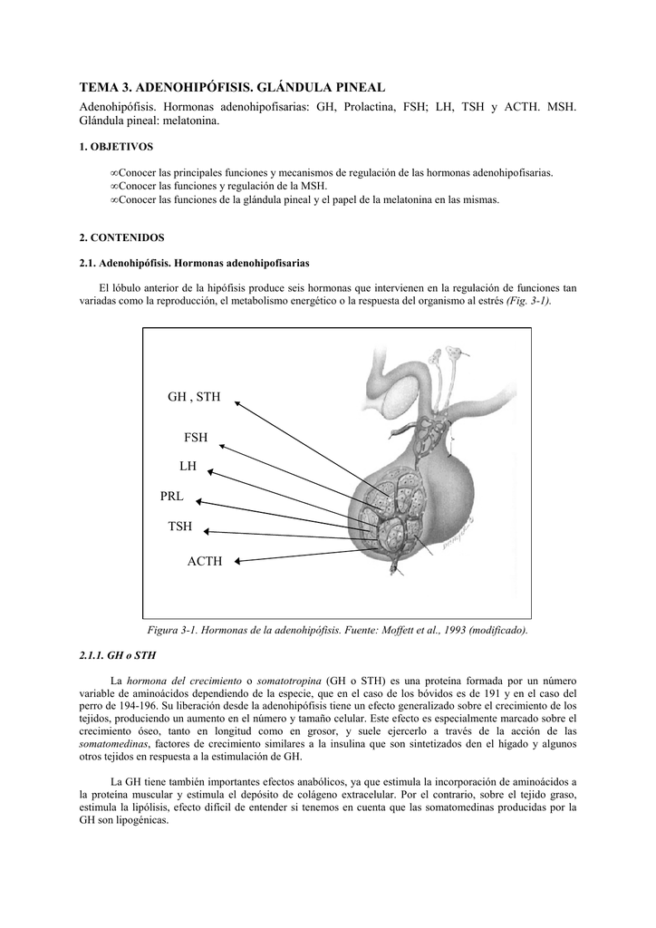 BLOQUE 3 - TEMA 3. Adenohipófisis. Glándula Pineal