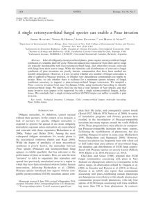 A single ectomycorrhizal fungal species can enable a Pinus