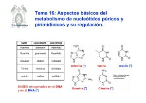 Sabía cómo Metabolismo basale pero lo olvidaste Aquí hay un recordatorio