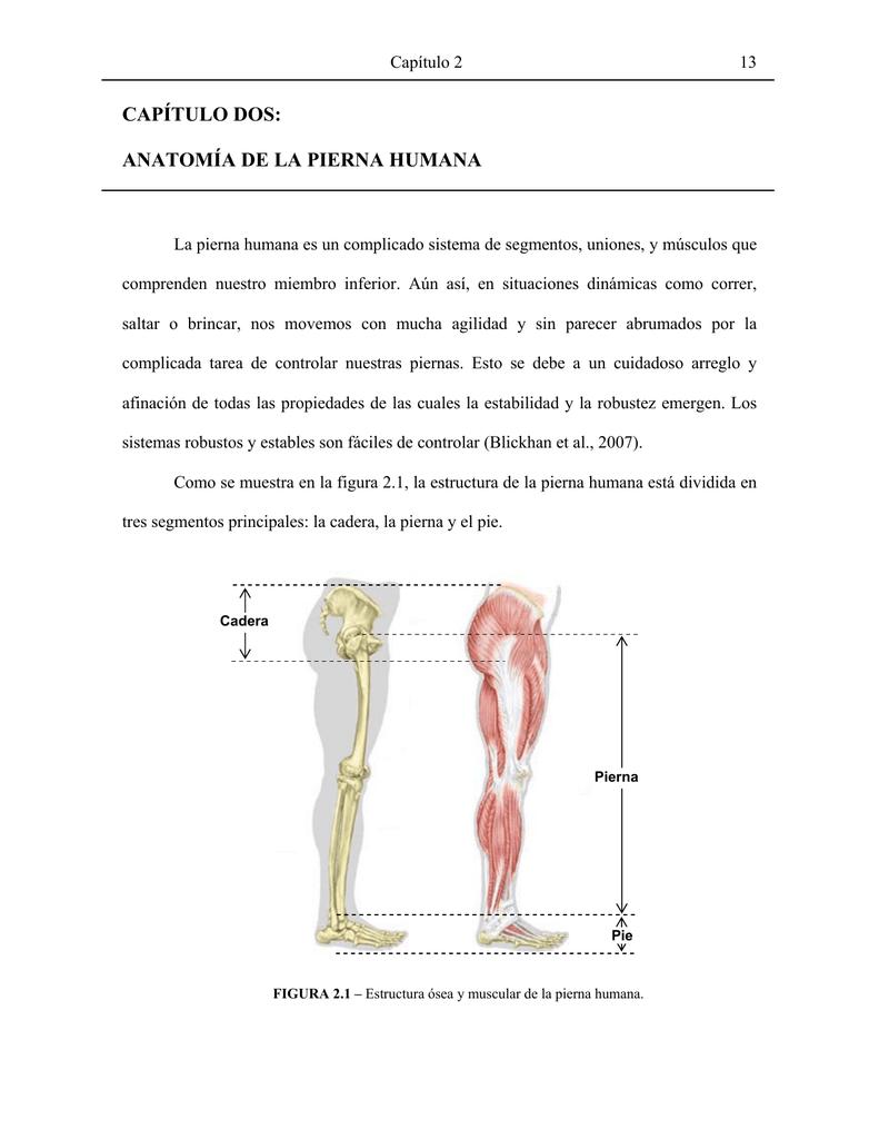 Capítulo Dos Anatomía De La Pierna Humana