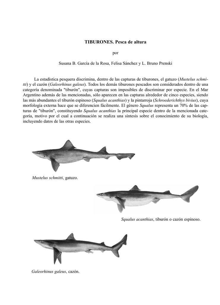 Excelente Anatomía Externa De Un Tiburón Cazón Foto - Imágenes de ...