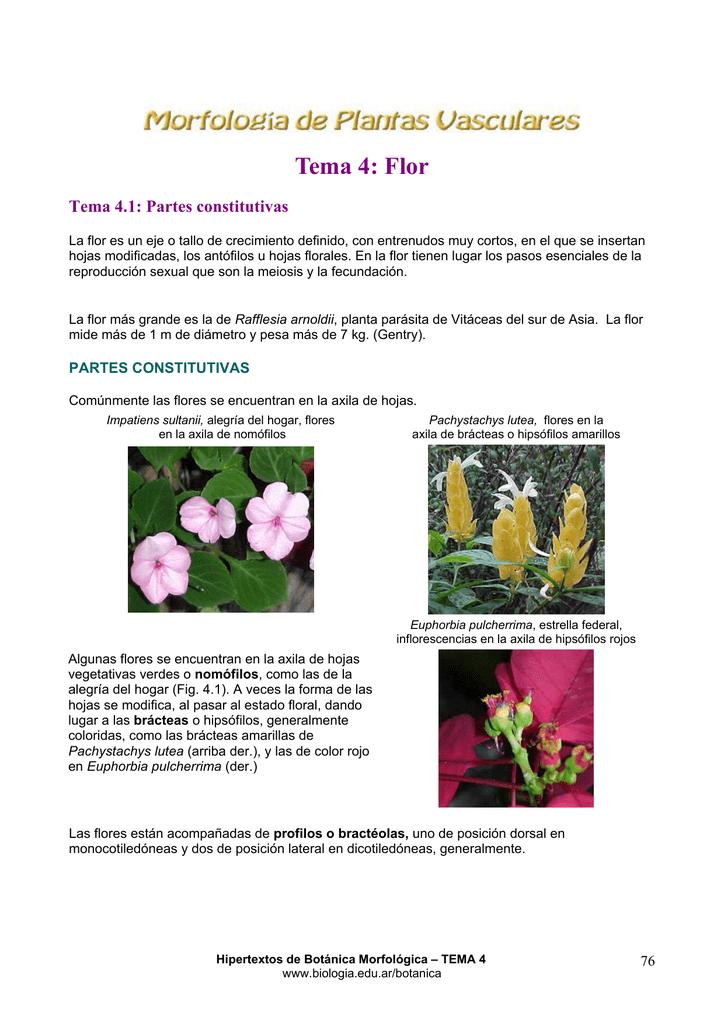 Tema 4: Flor