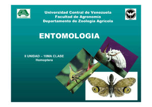 Entomologia - Universidad Central de Venezuela