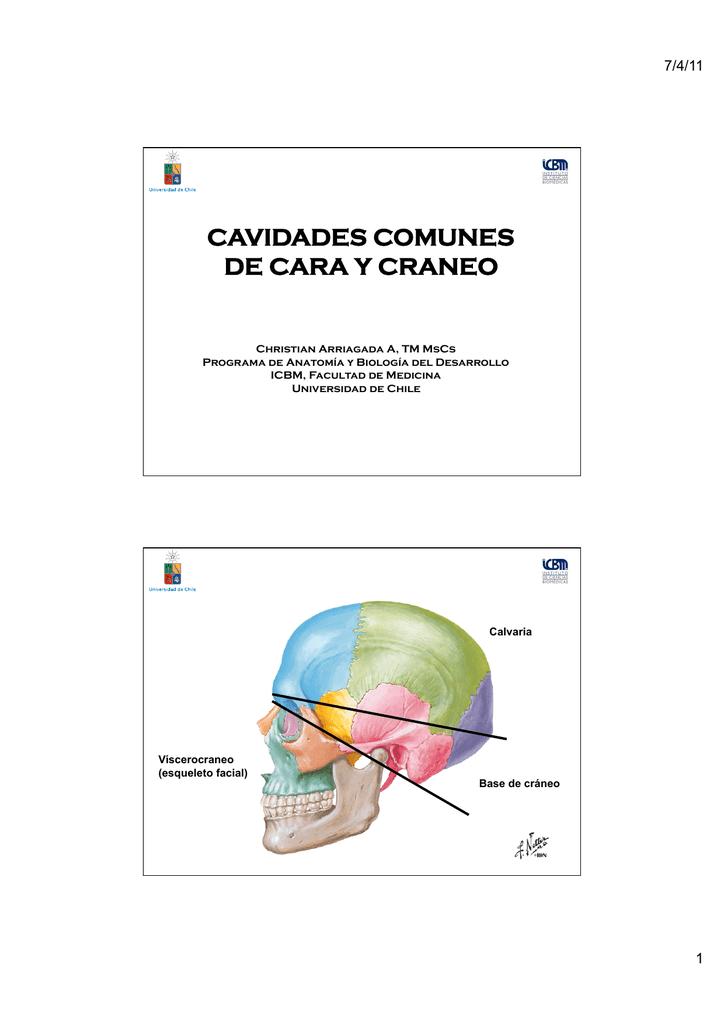 Cavidades comunes de craneo y cara - U