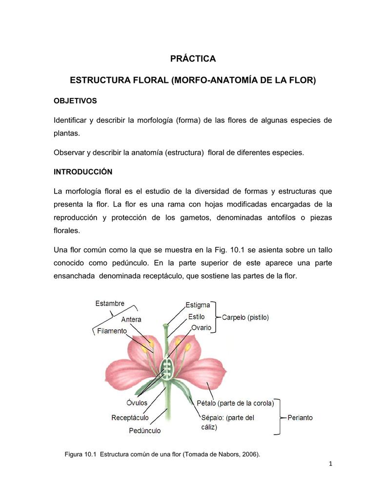 Práctica Estructura Floral Morfo Anatomía De La Flor