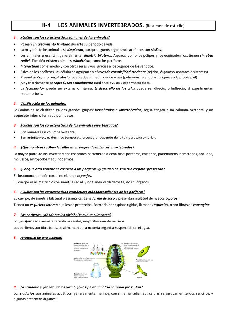 Increíble Anatomía De Porifera Embellecimiento - Imágenes de ...