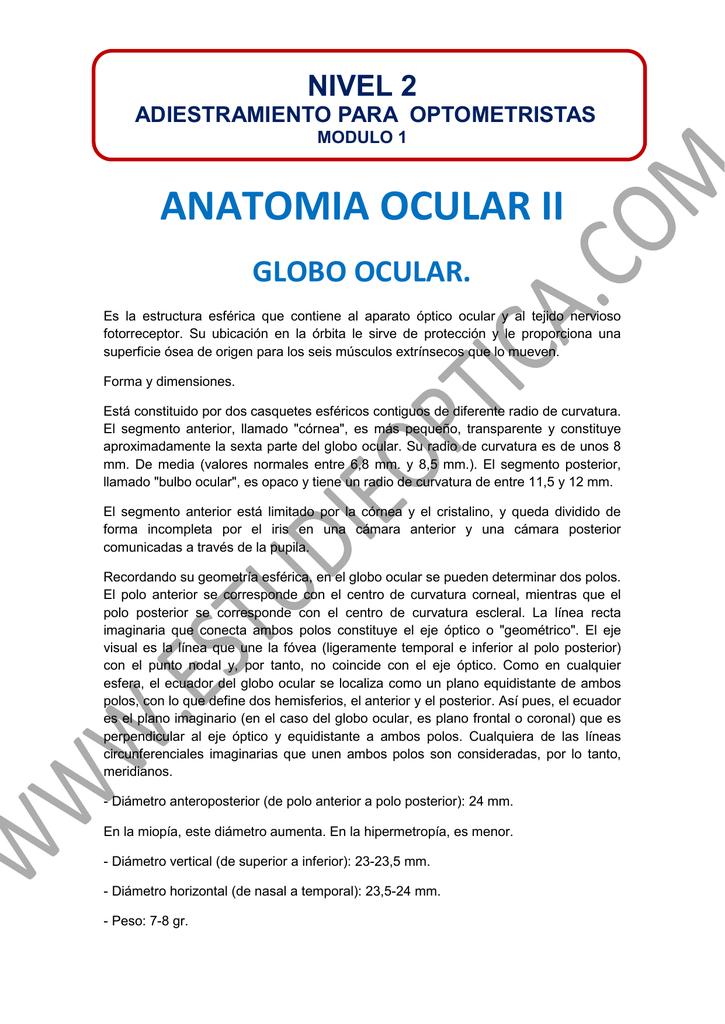 anatomia ocular ii - estudieoptica.com